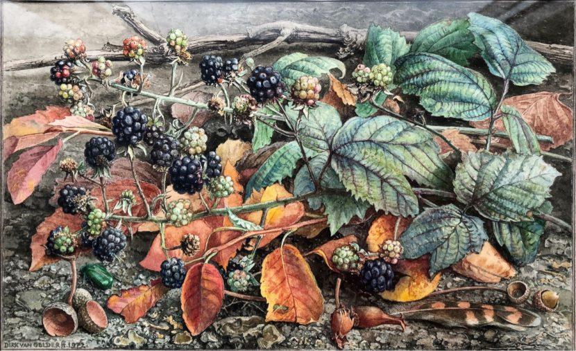 Afb.1. Dirk van Gelder, 'Herfstgrondje met bramen', aquarel (152 x 246 mm), 1972, particuliere collectie